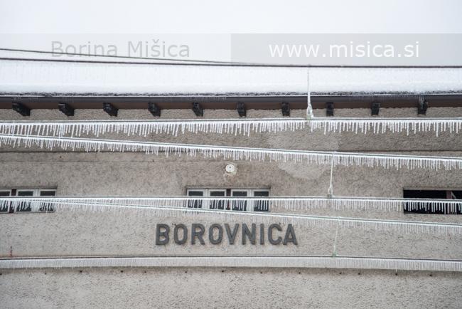 BorinaMisicaZled1