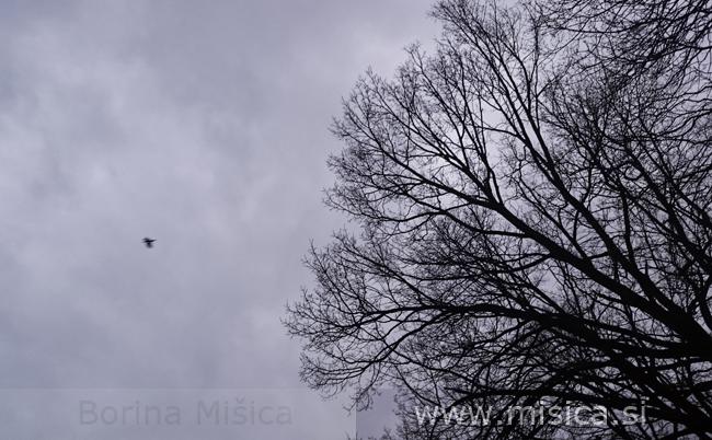 www.misica.si