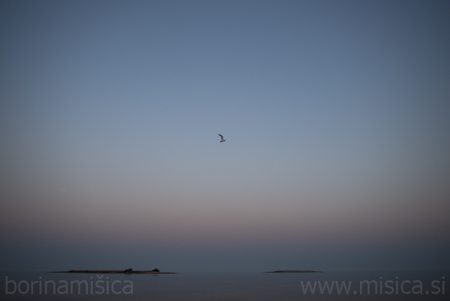 BorinaMisica-plovba-414