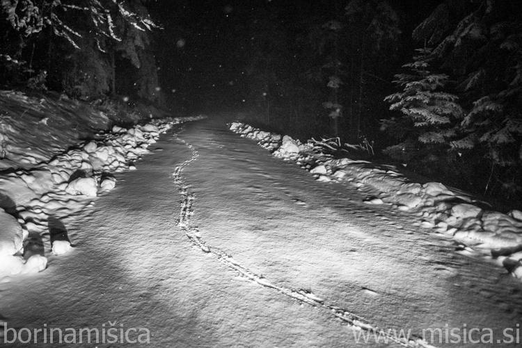 BorinaMisica-sneg-3-2